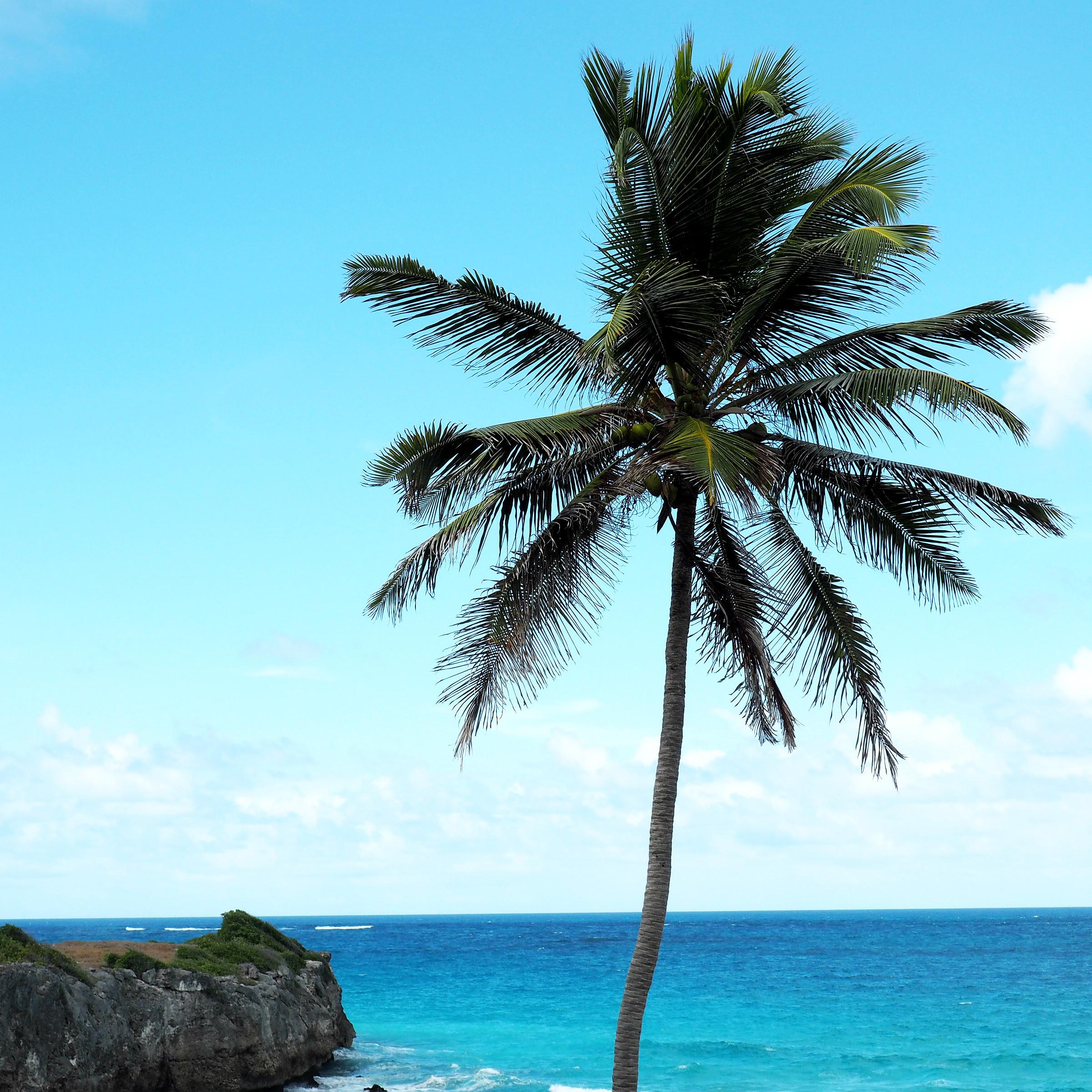 Tommeezjerry-Männerblog-Berlinblog-Fashionblog-Styleblog-Travelblog-Travel-Reiseblog-Reisen-Barbados-Karibik-Carribean-Summer-Sommer-Vacation-13