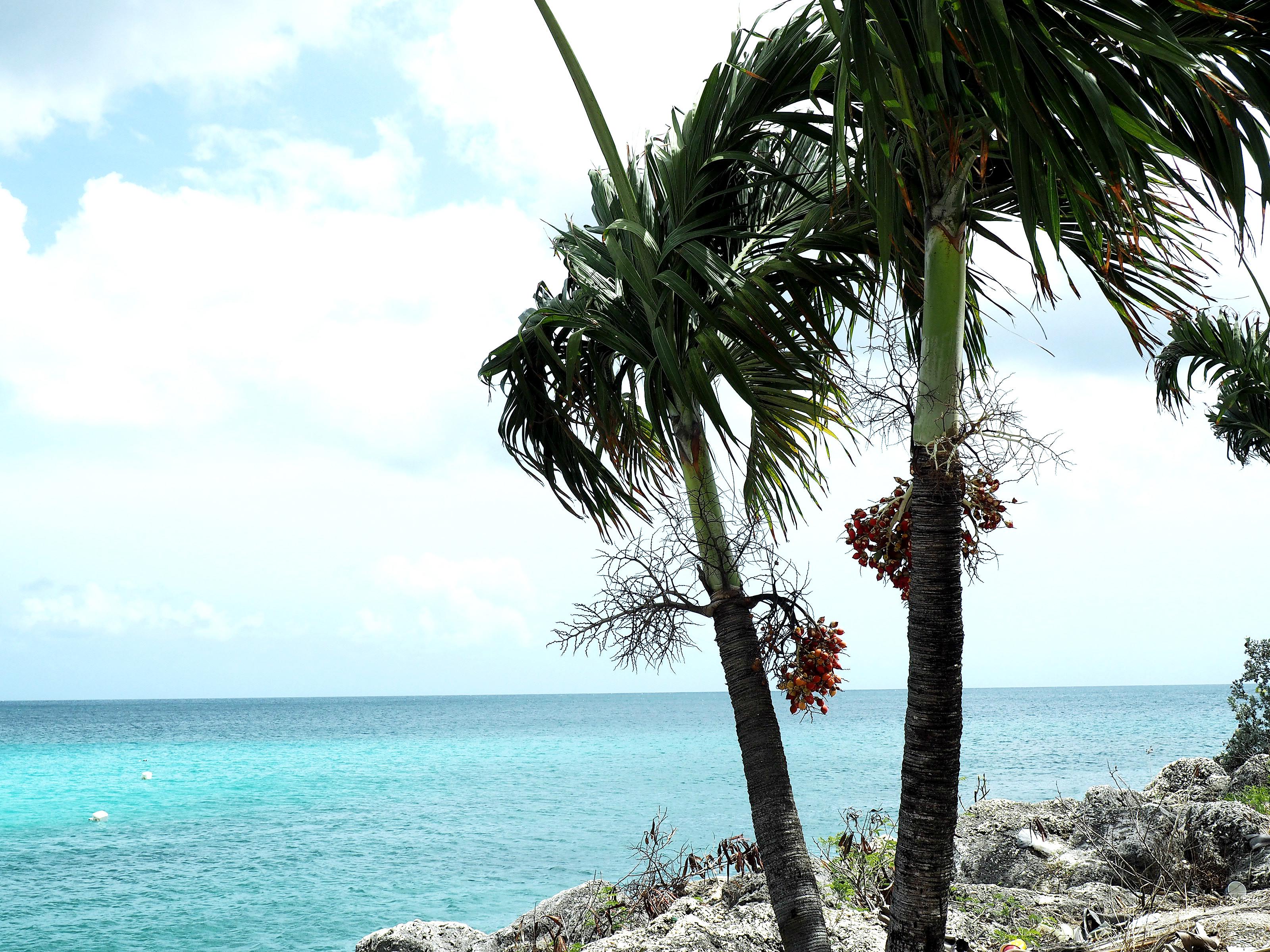 Tommeezjerry-Männerblog-Berlinblog-Fashionblog-Styleblog-Travelblog-Travel-Reiseblog-Reisen-Barbados-Karibik-Carribean-Summer-Sommer-Vacation-9